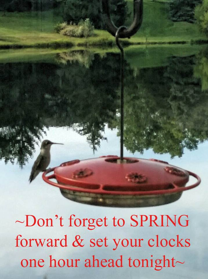 Dont forget to spring forward and set your clocks one hour ahead tonight.